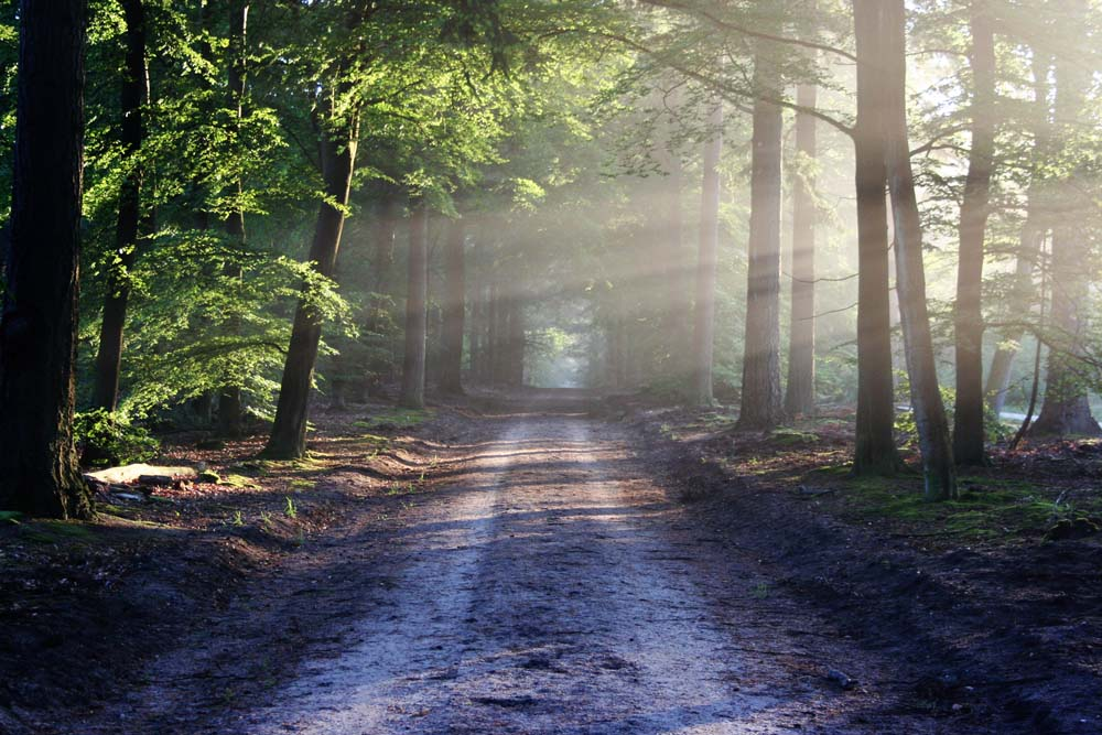 road-sun-rays-path_small.jpg